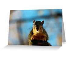 I want to discuss the peanut situation...I want more! Greeting Card