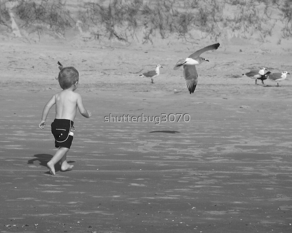 Chasing the gulls by shutterbug3070