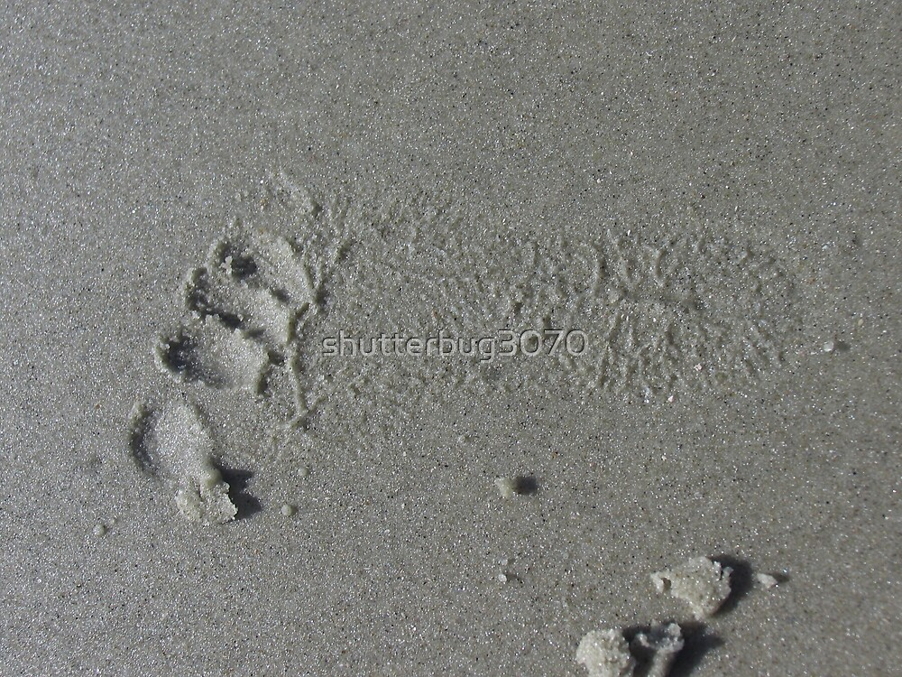 Footprint of my Heart by shutterbug3070
