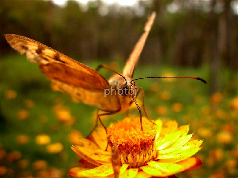 photoj- Bugs  by photoj
