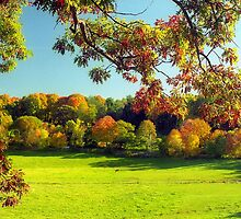 Autumn in Connecticut Meadow by Alberto  DeJesus