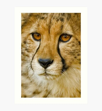Endangered II Art Print