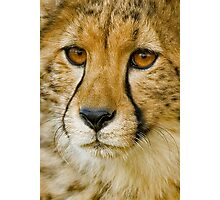 Endangered II Photographic Print