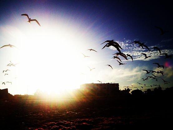 Fly away by Tara Toll
