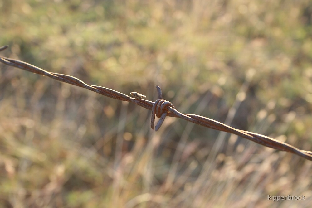 Barbwire by lkippenbrock