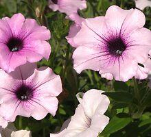 Purple Petunias by Paul S.  Atkinson