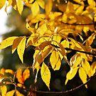 Yellow Light by AbigailJoy