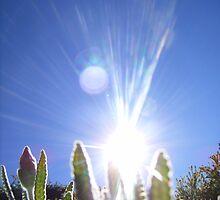 Sparkling Sun by Sarah Mosbey