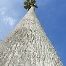 The tallest tree I have ever seen! by Sarah Mosbey