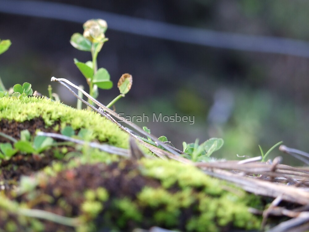 Moss by Sarah Mosbey
