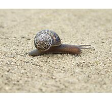 Mr. Snail Photographic Print