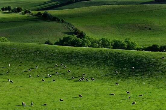 Meadow by Peter Daalder