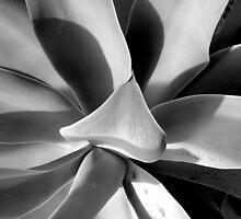 Aloe aloe aloe by Kablwerk