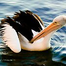 Pelican  by Lass With a Camera