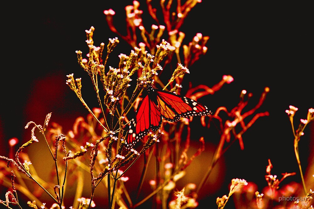 Golden Butterfly by photosan