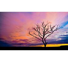 Spindly Dusk Photographic Print