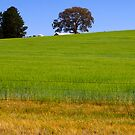 Beechworth Landscape by Mark Higgins