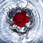 Rose 1 by Rebecka Wärja