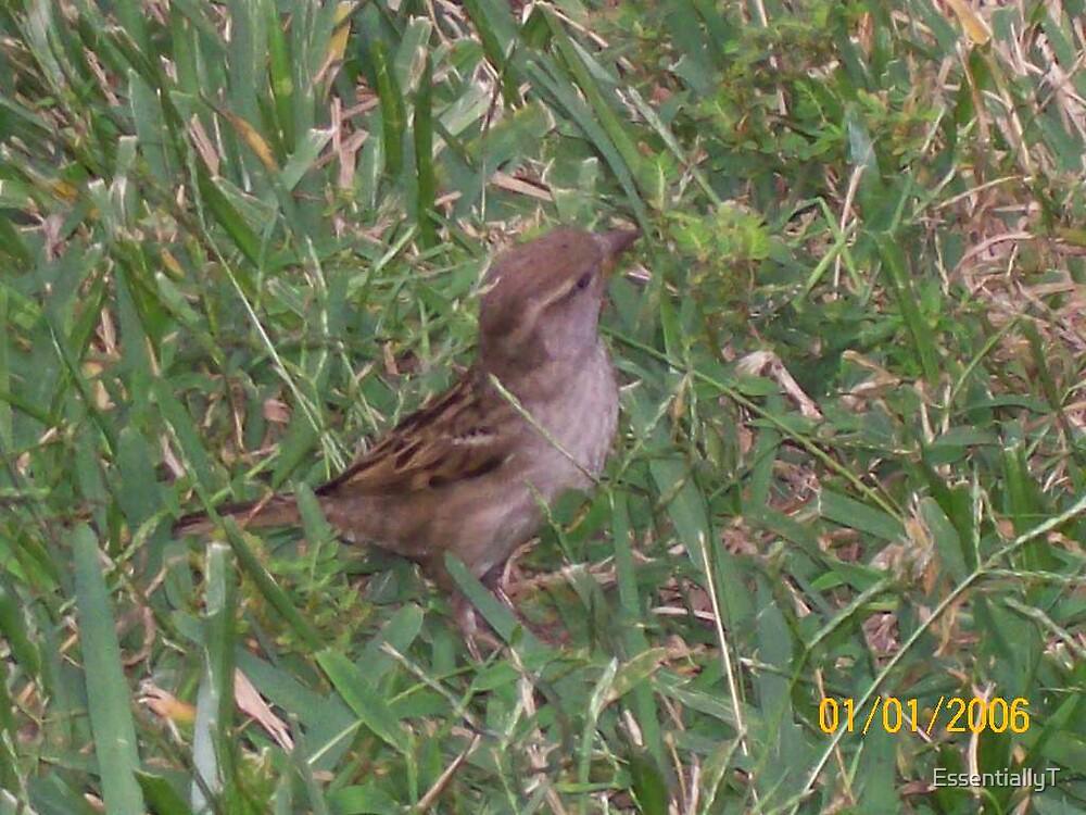 Little Birdie by EssentiallyT
