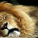 The Lion Sleeps by Jamie Lee