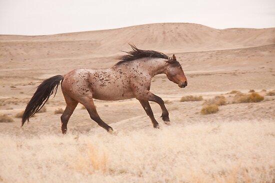 Wild Stallion Dance by Kent Keller