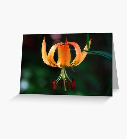 Turks Cap Lily Greeting Card