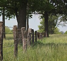 The Fenceline by AbigailJoy