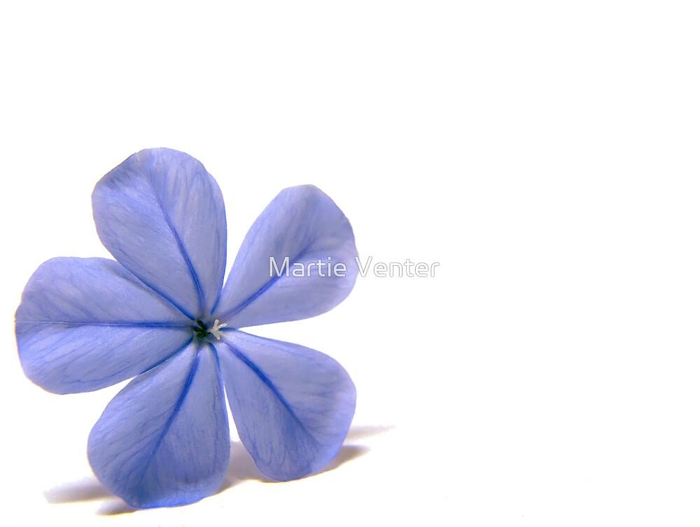 Plumbago Blue by Martie Venter