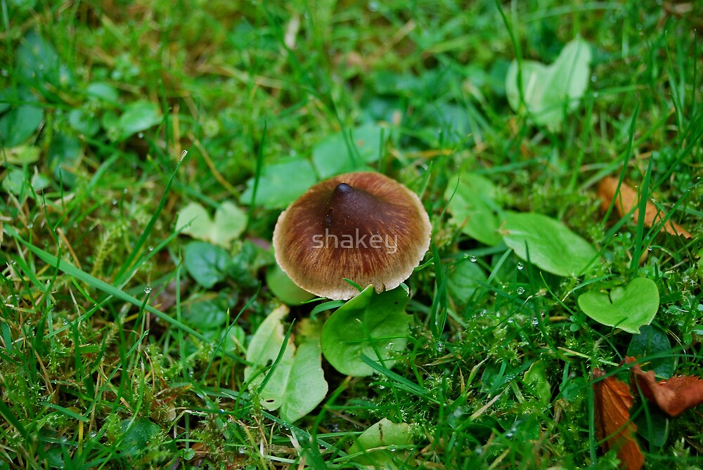 Toadstool by shakey