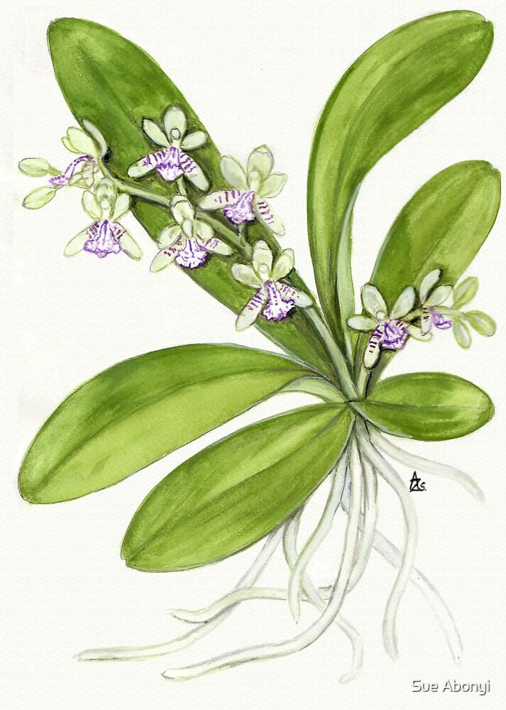Sedirea japonica by Sue Abonyi