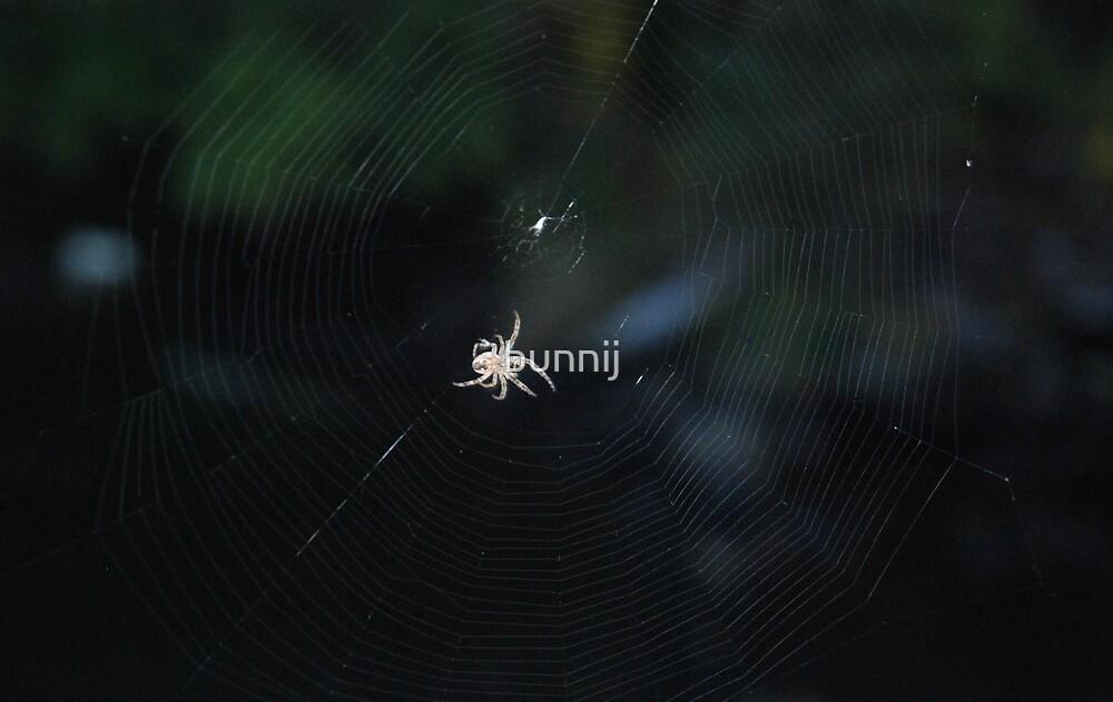 Spider Web by bunnij