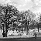 Snow in Central Park by Curley