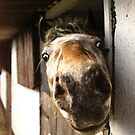 Why the Long Face? by billyboy
