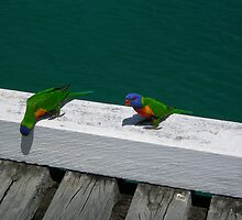 Two Birds by nvs7