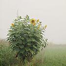 Sunflower Patch by AbigailJoy