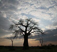 Tree by tokyoty