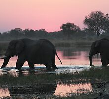 Elephants fording by tokyoty