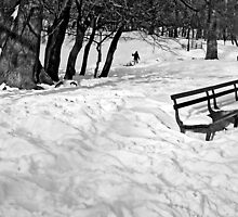 Park Bench by Curley