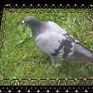 Pigeon on the Green by Starr1949