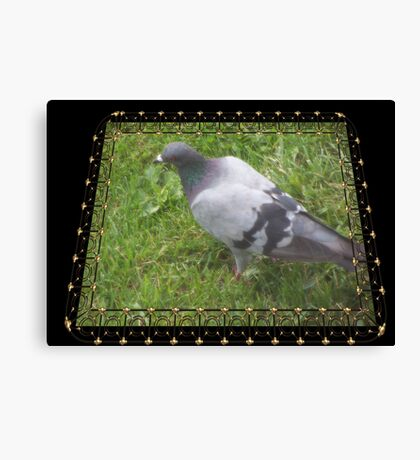 Pigeon on the Green Canvas Print