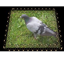 Pigeon on the Green Photographic Print
