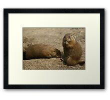 Cute Playful Groundhog Framed Print