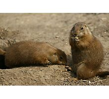 Cute Playful Groundhog Photographic Print
