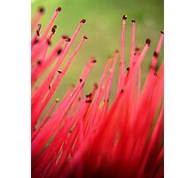 nature brush Photographic Print