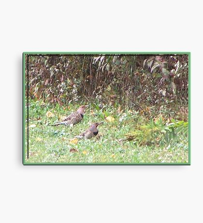 My Friend Flickers Canvas Print