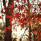 Flaming Leaves by AbigailJoy