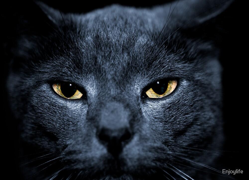 Black cat  by Enjoylife