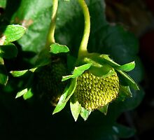 Green Strawberry by Margot Kiesskalt