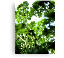 Parsley Canopy Canvas Print