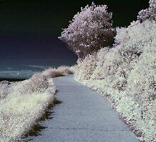 South Head walk in false-colour IR by Trent Wallis